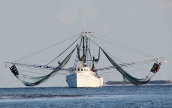 Shrimp Boats Arriving