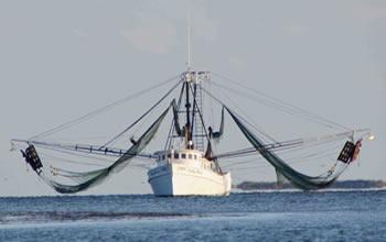 shrimp-boat-v2